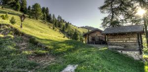cabane nature